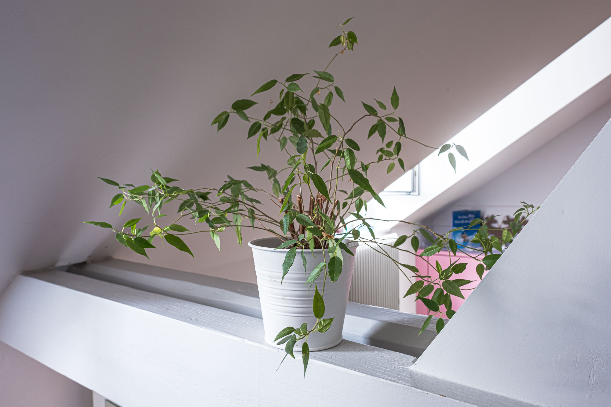 Pflanze im Raum